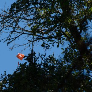 bag-in-tree-botanic-gdn