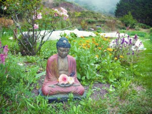 Buddha in field